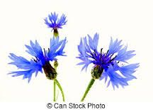 Image result for artist images of cornflowers
