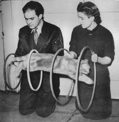 hollyhocksandtulips:  Cat tricks, 1940s