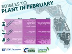 February is a big month for planting in Florida. While there is still a slight chance for freezing temperatures, most vegetables need to be started this month if they are to produce before the summer Growing Winter Vegetables, Planting Vegetables, Organic Vegetables, Vegetable Gardening, Veggies, Veggie Gardens, Vegetables List, Florida Plants, Florida Gardening