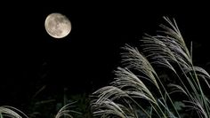 FULL MOON NIGHT WOOOOOWWWW WALLPAPER - (#76065) - HD Wallpapers…