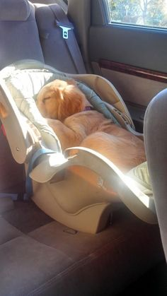 16 Adorable Fur Babies That Don't Realize They're Just Not Human...