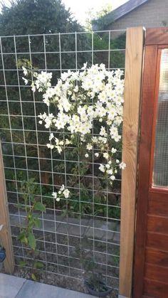 Outdoor Gardens, Pergola, Outdoor Structures, Clematis, Fences, Garden Ideas, Flowers, Plants, Gardening