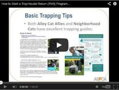 How to start a TNR program in your community. Do you want to start a trap-neuter-return program to help your community cats in your town, but aren't sure how to begin? - See more at: http://maddiesinstitute.typepad.com/chewonthis/2013/11/how-to-start-a-tnr-program-in-your-community.html#sthash.crF8hyhG.dpuf                                  Also See TNR Video