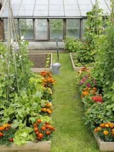 Potager Garden Photographic Print: Summer Garden with Mixed Vegetables and Flowers Growing in Raised Beds with Marigolds, Norfolk, UK by Gary Smith : Potager Garden, Veg Garden, Vegetable Garden Design, Vegetable Gardening, Veggie Gardens, Fruit Garden, Garden Care, Marigolds In Garden, Urban Garden Design