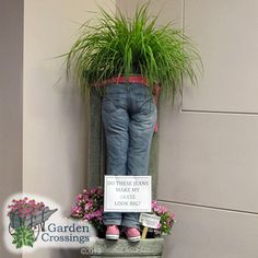 Outside the box planters. Shop for plants online at www.gardencrossings.com