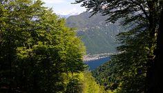 Lanzo d'Intelvi uno scorcio dal bosco del Meriggio sul Lago di Lugano e Gandria - Aprile 2014