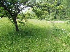 The sanctuary will be set up on a beautiful, woodland site in Travnik where the dogs will be able to run and play all day.