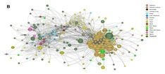 Data Mining Indian Recipes Reveals New Food Pairing Phenomenon | MIT Technology Review