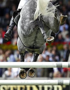 equestrian equine cheval pferde caballo show jumping   dappled grey jumper hind feet