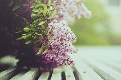 color flower, purple, flowers