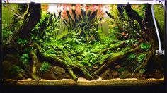 Wabi Kusa , Paludarıum , Aquascaping ,Terrarium Aquarıum Setup - Timeline