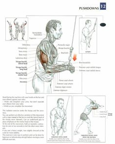 Triceps #workout #gymaholic