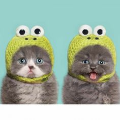 Celebrate National Cat Day With 19 Photos Of Cats Wearing Clothes - AWW - - Awwe! The post Celebrate National Cat Day With 19 Photos Of Cats Wearing Clothes appeared first on Gag Dad. Baby Animals, Funny Animals, Cute Animals, Funniest Animals, Animals Images, Cute Kittens, Cats And Kittens, Cats In Hats, Black Kittens