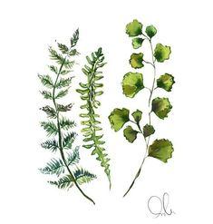 Botanical Print: Fern - Modern Design Botanical Prints, Ferns, Plant Leaves, Modern Design, Wall Art, Illustration, Ivy Plants, Walls, Spaces