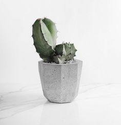 cactus in a concrete planter