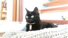 Lili concentrada 2