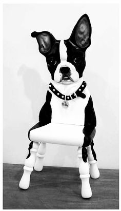 Boston terrier sculpture on stool. WOW