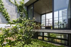 raised inner courtyard - Binh House - 'House for Trees' prototype - Ho Chi Minh City, Vietnam - Vo Trong Nghia Architect - 2016 Architecture Résidentielle, Contemporary Architecture, Vietnam, Design Jardin, Water House, Concrete Houses, Ho Chi Minh City, Interior Exterior, Room Interior