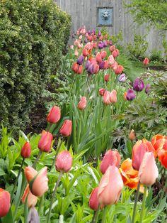Spring Bulb Gardens to Soothe Your Soul - Town & Country Living Cheap Landscaping Ideas, Landscaping Near Me, Luxury Landscaping, Garden Landscaping, Tulips Garden, Garden Bulbs, Flower Garden Design, Spring Bulbs, Your Soul