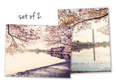 Set of Two Cherry Blossom Photo Prints Washington by FrescaPhoto, $30.00
