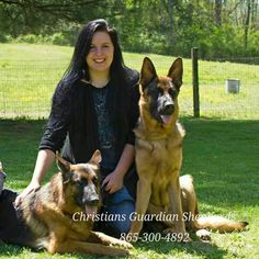 German Shepherds For Sale .. Knoxville, Tennessee www.christiansguardianshepherds.com