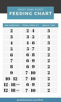 Great Dane Feeding Chart by Month Age [months] Food [cups] Meals / day 2 2 – 4 3 3 3 – 5 3 4 4 – 6 3 5 5 – 7 2 6 6 – 8 2 7 6 – 9 2 8 6 – 9 2 9 7 – 10 2 10 – 12 7 – 10 2 12 – 18 (females) 6 – 9 2 12 – 18 (males) 7 – 10 2 Dog Training School, Dog Training Books, Basic Dog Training, Dane Puppies, Great Dane Puppy, Food Charts, Puppy Food, Dog Friends, Dog Food Recipes