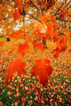 Φθινοπωρινα φυλλα