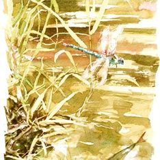 Philip Bannister - Traditional Watercolour Illustrator from Worcestershire