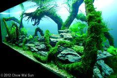 2012 AGA Aquascaping Contest - Entry #353