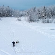 """""""Happy Girls!""""⠀  ⠀  Skijoring on Chena Lake.⠀  ⠀  """"Follow"""" me please, adding more photos daily using later.com⠀  ⠀  Images available on my smugmug site!⠀  ⠀  © jessedavisimages, 2016⠀  #jessedavisimages ⠀  #blockai⠀  #drone #dji #dronestagram #droneoftheday ⠀  #dronefly #aerialphotography⠀  #dronesdaily #quadcopter #droneporn⠀  #dronephotography #djiphantom ⠀  #fromwhereidrone #dronelife ⠀  #flying #uav #instadrone #djiglobal #djidrone #djiphantom4pro+ #aerial #above"""