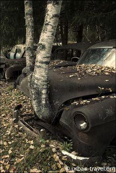 Swedish car graveyard