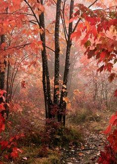 Ya se siente el otoño en el hemisferio norte.