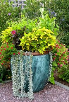 How to build a container garden-this would look great by the pool!