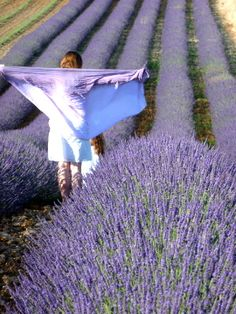 lavender fields -- also very popular for many uses. (food, soaps, salt scrubs, dye)