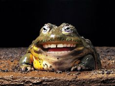 Laughing Frog | Flickr - Photo Sharing!