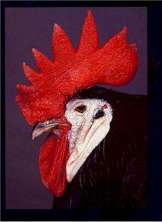 390 Chicken Illustration Ideas Chicken Illustration Chicken Art Rooster Art