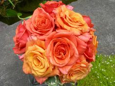 Pretty orange/coral-colored flowers, matches the color palette I like (orange, gold, pink, coral)