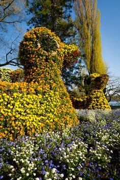 Blumen-Enten auf der Blumeninsel Mainau