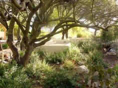 Tohono Chul Park Garden, Tucson