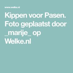 Kippen voor Pasen. Foto geplaatst door _marije_ op Welke.nl