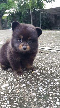 Puppy bear/bear puppy