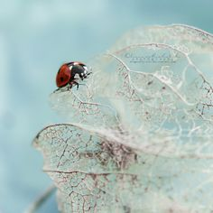 Into infinity. by dragonfly-oli.deviantart.com on @deviantART