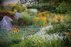 Meadow Entry Garden: Wild at Heart. Garden Design/Photography: Michaela Harlow