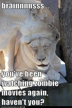 Funny Animal Captions - Animal Capshunz: I've Got to Change Up Our Netflix Queue