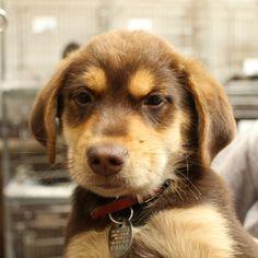 Adopt Me: V34453