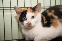 KARLA HAS BEEN RESCUED!! THE 1214TH CAT RESCUED FROM CACC IN 2015  2 OCT @9AM ET - PULLED FOR RESCUE BY COLUMBUS HUMANE SOCIETY FOR LOCAL FARMHOUSE PET PLACEMENT.