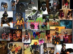 Our Halloween Cover pic of Fans/Friends' Dobermans dressed up for Halloween.