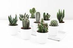 Resultado de imagen para cactus decor