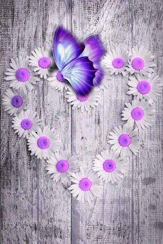 - My Wallpaper Purple Daisy, Purple Love, All Things Purple, Purple Hearts, Butterfly Pictures, Butterfly Flowers, Beautiful Butterflies, Butterfly Canvas, Butterfly Wallpaper