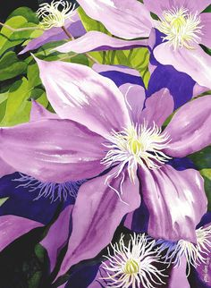 Purple Clematis in Sunlight is a fine art botanical watercolor painting of sunlight and shadows accenting the petals, created by artist Janis Grau.  PURPLE CLEMATIS IN SUNLIGHT BY JANIS GRAU THE COLOR AND VALUES ON THE PETALS AND LEAVES GIVE THE LOOK OF LIGHT AND SHADING, VERY BEAUTIFUL.